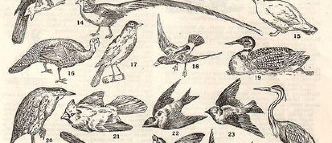 brume-de-colombe Le Cirque des Brumes